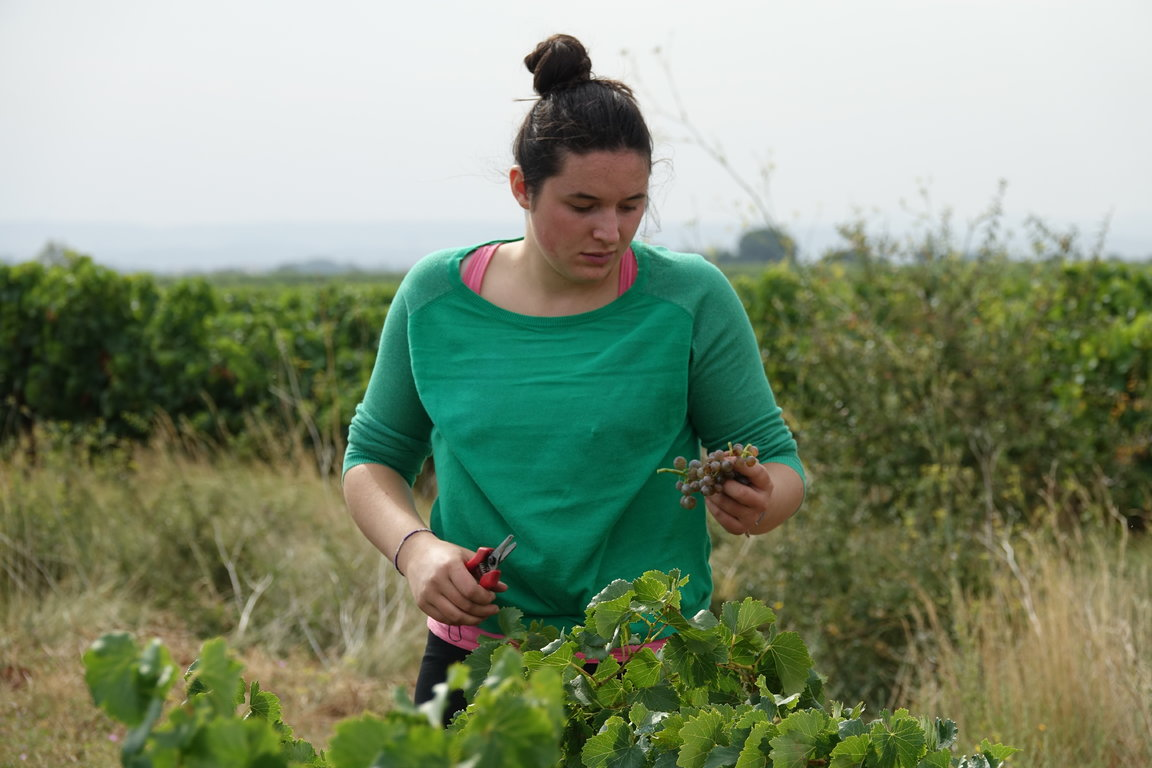 Philomène Vendanges 2017